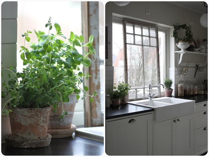 55 best herbs images on pinterest herbs garden herb gardening potted herbs can be grown indoors near a warm sunny window if your kitchen has the right aspect keep them handy for adding to meals without venturing fandeluxe Ebook collections