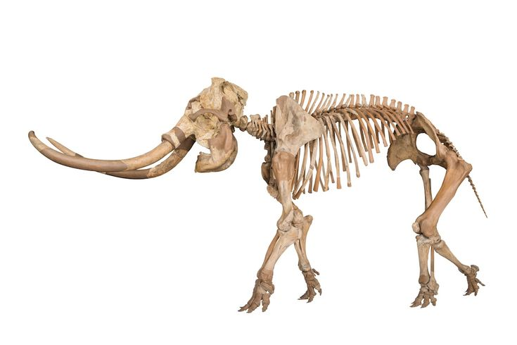 Visit Japan's prehistoric past   The Japan Times