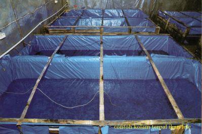 Budidaya Ikan Lele - 2
