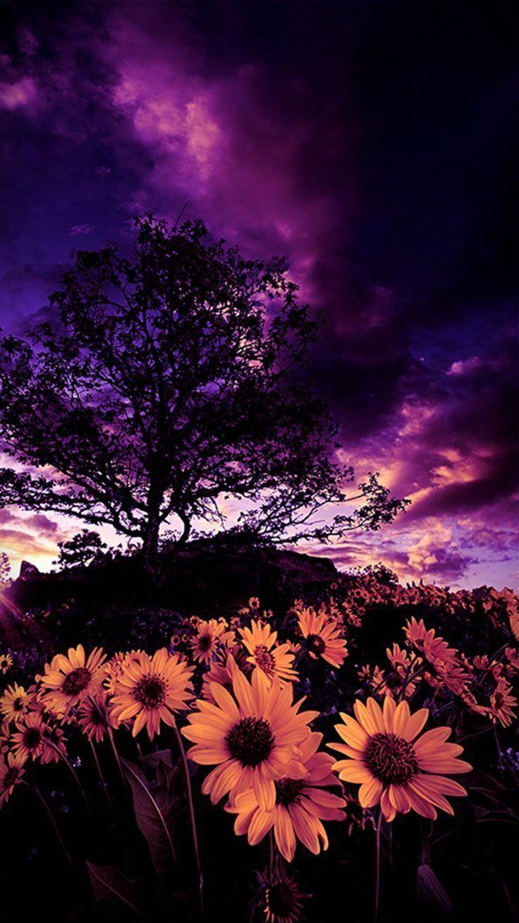 #Sonnenblume #Fotoshop #Fotografie #Tapete #SonnenblumeTapete