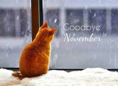 Goodbye November Winter Cat Quote