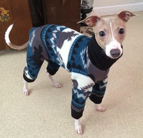 Italian Greyhound Pajamas - 'Aztec Moose Pajamas'. Small dog pajamas. Pet pajamas. Italian Greyhound Clothes. Pet clothing. Iggy clothes. by Duds4BudsToo on Etsy https://www.etsy.com/listing/478228965/italian-greyhound-pajamas-aztec-moose