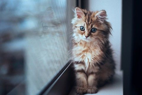 needin' some cute today.Cat Photography, Adorable Kittens, Cute Cat, Daisies, Cutest Kittens, Kitty, Cute Pictures, Eye, Animal