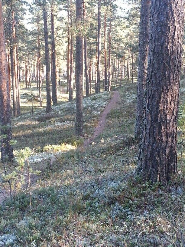 Metsäpolku:)