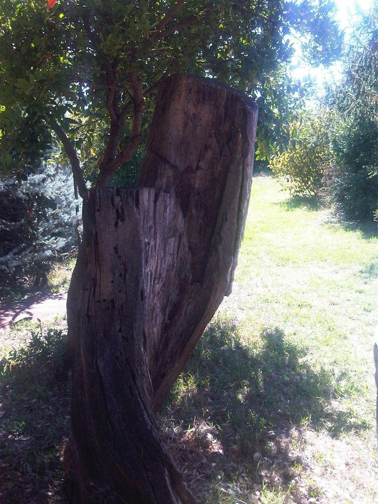 tree sculpure