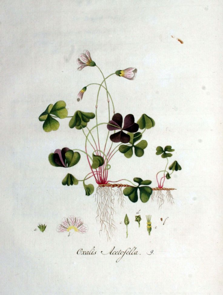 1000 images about dessin de fleurs on pinterest for Botanic fleurs artificielles