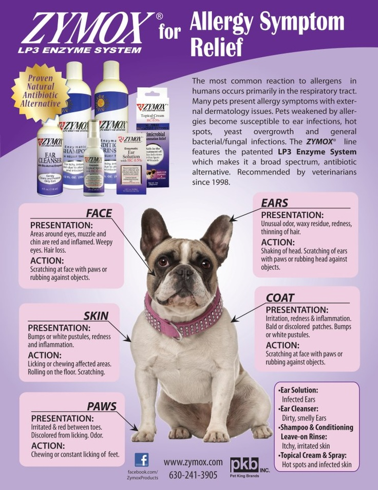 Chronic Ear Infections In Dogs Allergies