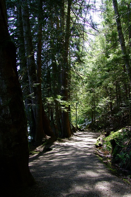 One of the trails around Alice Lake - Photos by Deborah Harris Laflamme, Vancouver, BC, Can.