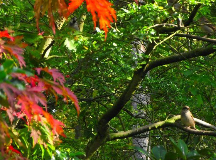 Autumn Day in Hembygdsparken, Ängelholm.  #Ängelholm #Sweden #Autumn #Hembygdsparken