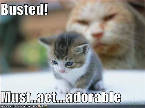 Funny Cute Kittens | In Photos - http://ebooks2buy.biz/photojobs - Make Money With Your Pictures World Wide