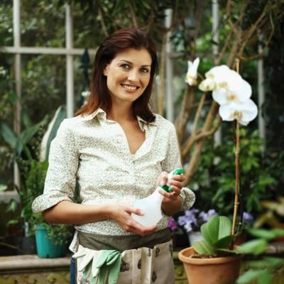 The orchid family (Orchidaceae) consists of a wide range of terrestrial, perennial and herbaceous plants categorized in several genera and species. Orchids are prized by homeowners for their ...