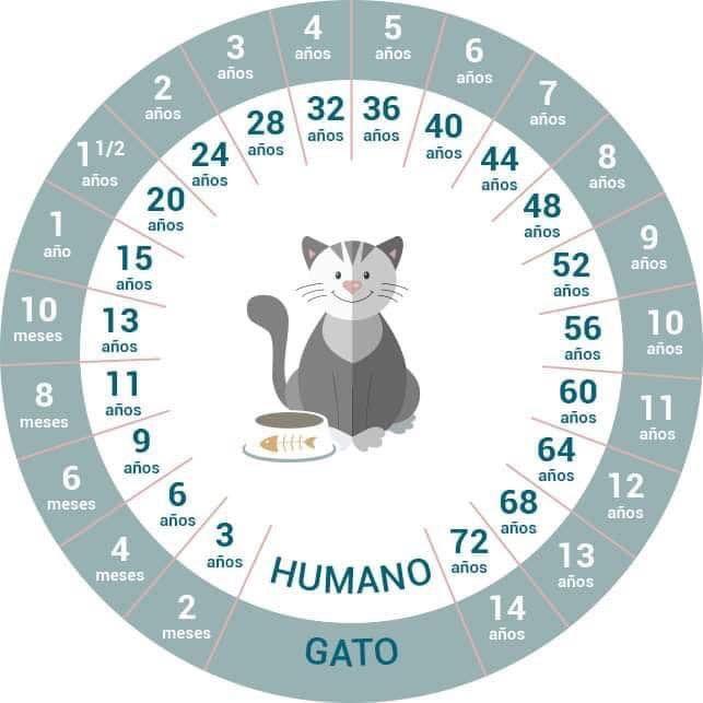Edad De Los Gatos Cat S Age Edad De Gatos Lenguaje De Los Gatos Gatos