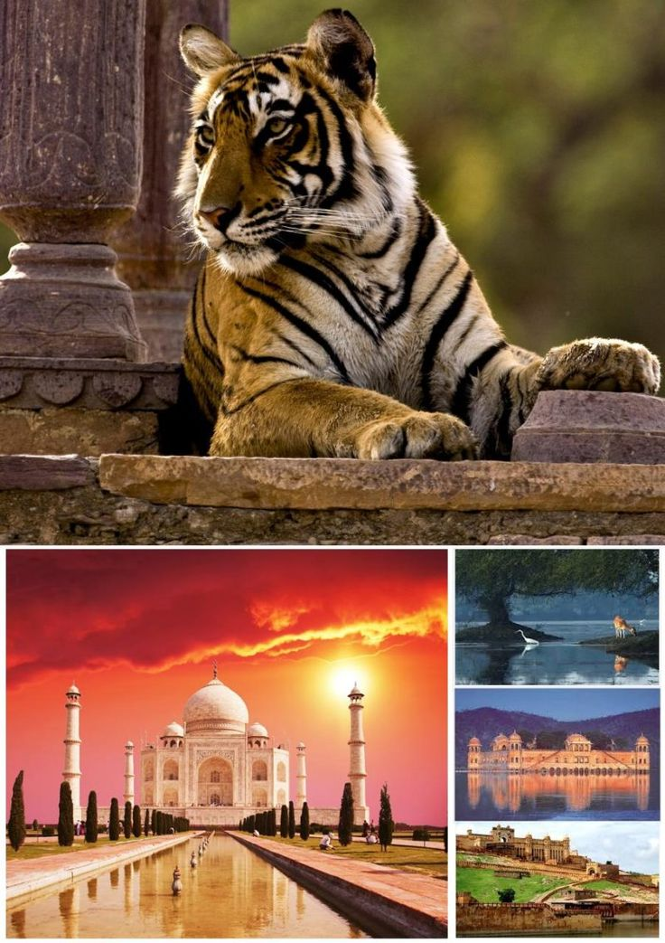 Rajasthan Tour 5n/6d - Tours From Delhi - Custom made Private Guided Tours in India - http://toursfromdelhi.com/rajasthan-tour-package-5n6d-delhi-jaipur-agra-ranthambhore/