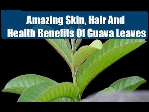 Amazing health benefits of guava , guava fruit , guava leaf tea