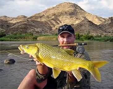 Yellowfish on the fly.