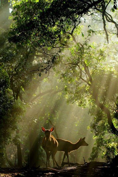 To, co najpiękniejsze w naturze bywa płochliwe i umyka naszym oczom. Zatrzymaj piękno natury na dłużej na http://www.big-active.pl/