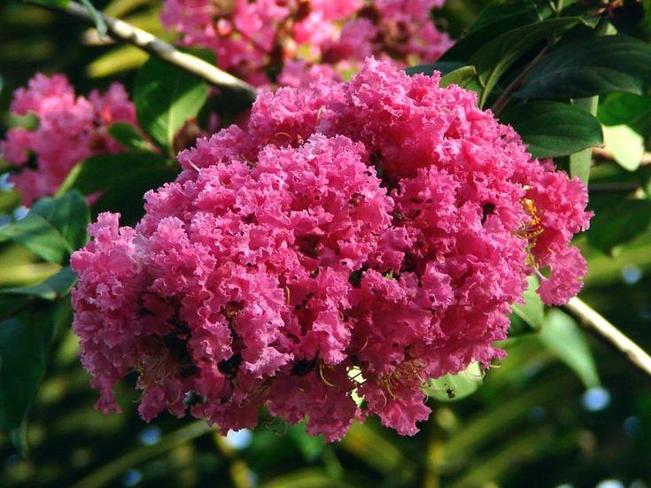 Árboles ornamentales para macetas: ¿cuál es tu favorito? - http://www.jardineriaon.com/arboles-ornamentales-para-macetas-cual-es-tu-favorito.html