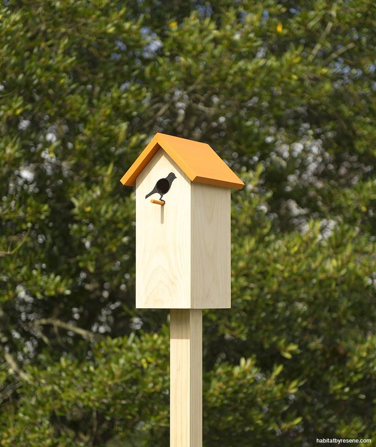 Build a birdhouse.