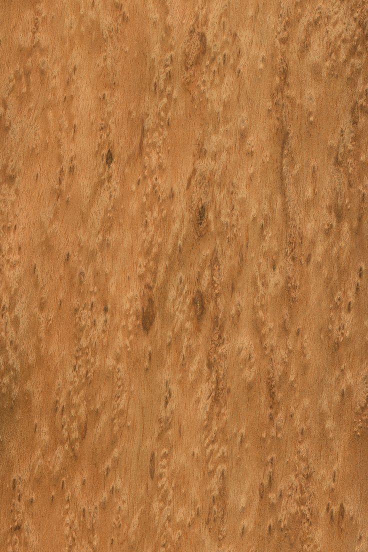 Tola Maser | Furnier: Holzart, Tola, Blatt, braun, #Holzarten #Furniere #Holz