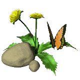 california poppy, papavero analgesico