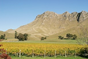 Vines beneath Te Mata Peak
