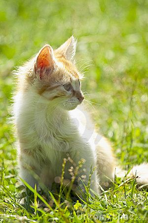 Kitten in the grass, relaxing in the sunlight