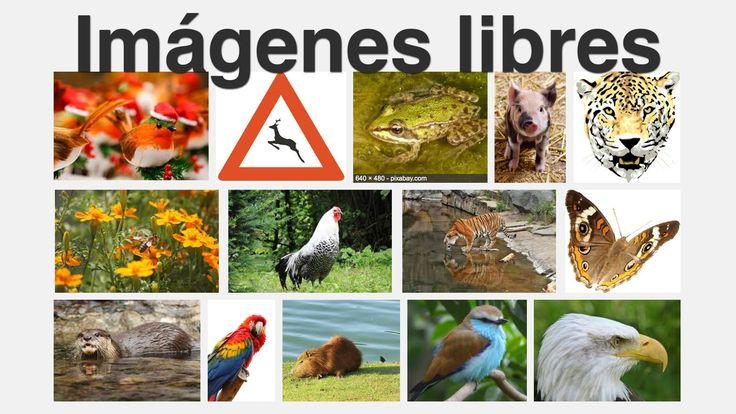 http://wwwhatsnew.com | ¿Buscas imágenes libres? Te explicamos como encontrar imágenes libres de derechos por internet en webs como flickr o bancos de imágenes.