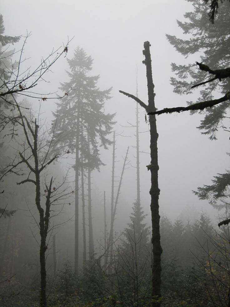 Forest, BW, Black and White, Tree, fog, mist