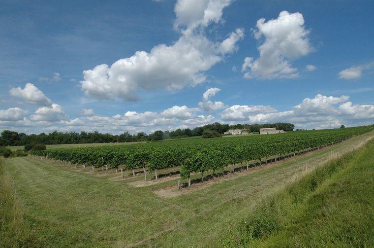 Venez découvrir le vignoble du château Boutinet sur le site Wine Tour Booking. http://bordeaux.winetourbooking.com/fr/propriete/chateau-boutinet-31.html
