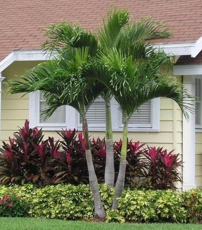 Landscape Design Front Of House Florida