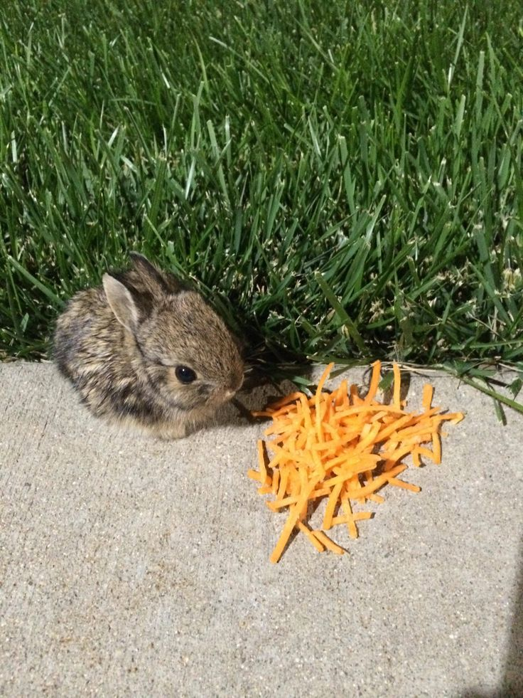 how to find baby bunnies in your yard
