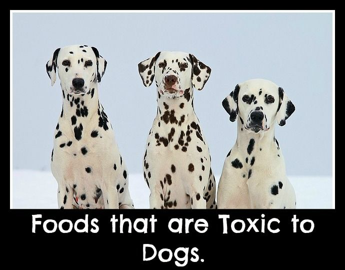 Foods that are toxic for dogs.