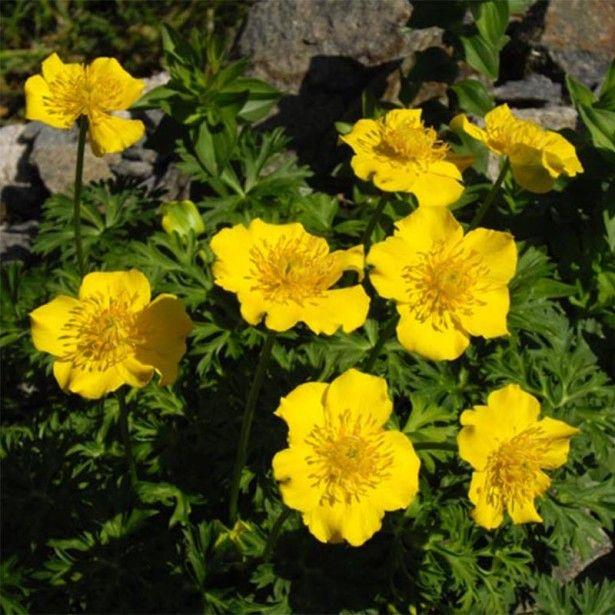 Les 25 meilleures idées de la catégorie Fleurs jaunes vivaces sur ...