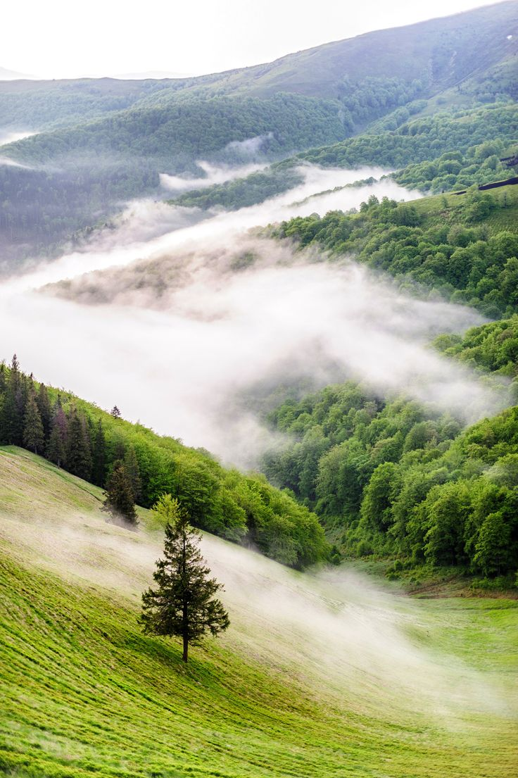 ponderation:  Mountains, Ukraine by Олег Бондар