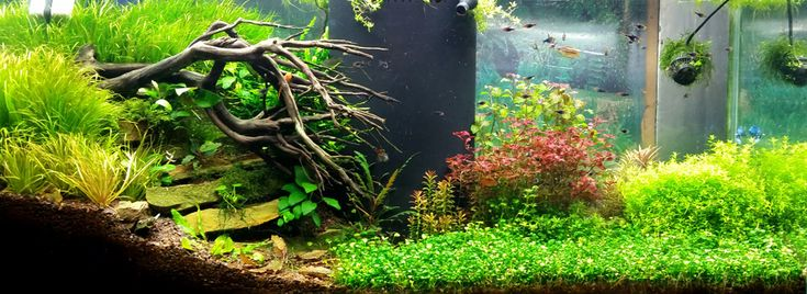 Aquarium Maintenance and Service in the Pittsburgh Area