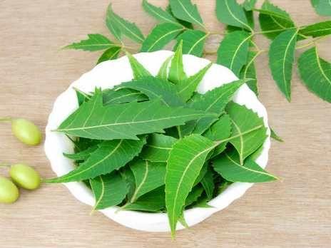 L'Olio di Neem è un antico rimedio naturale usato come antiparassitario e per curare diversi disturbi della pelle. Scopri tutti i suoi usi e le proprietà!