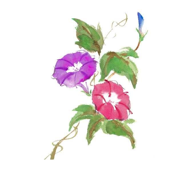 アサガオはいろいろな色がいっせいに咲くから楽しい! Copyright © 2017 Yoshiko Takatsuka. All rights Reserved. 無断転載を禁止致します