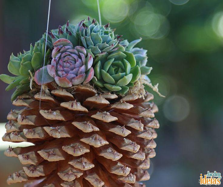 Essa é pra quem gosta de desafios: cultivar suculentas em uma pinha. Pra fazer isso  o indicado é utilizar lã de rocha entre os espaços da pinha. Em seguida, coloque as suculentas de maneira que as raízes fiquem em contato com a lã de rocha.
