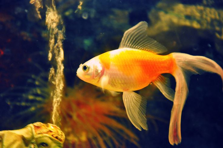 fish wallpapers HD Wallpapers Pulse fish wallpapers HD Wallpapers Pulse
