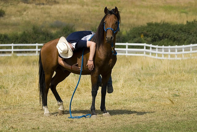Tips for Starting a Horse Under Saddle!