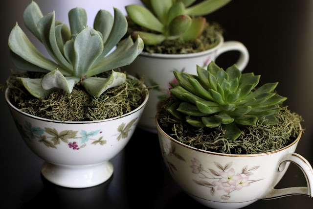 I have so many succulents. - this is perfect. Would make cute