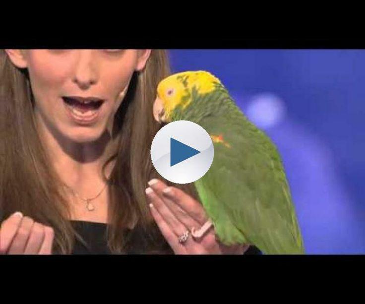 Papagalu care vorbeste,plange si canta ca un om { TREBUIE VAZUT =)))) } BY