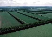Shelterbelts (windbreaks): planted to protect crops and soil; shelter belts usually consist of a series of mixed conifer and deciduous trees or shrubs planted in rows perpendicular to the prevailing wind flow; they greatly reduce the wind speed behind them