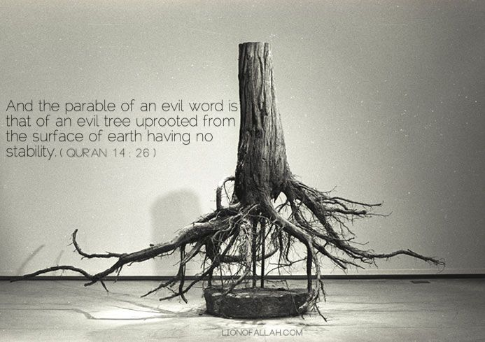 And the parable of an evil word is that of an evil tree uprooted from the surface of the earth having no stability