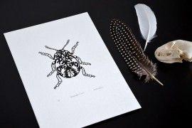 Suzanne Norris - Beetle zeefruk/screenprint