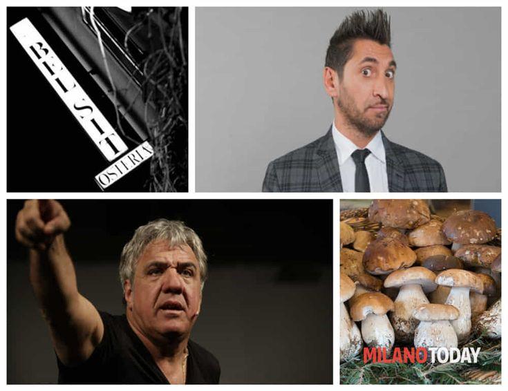 festa dei funghi: due serate con musica e cabaret Eventi a Milano