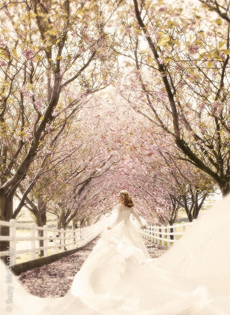Cherry Blossom Suzy McCanny photography. Fine Art photography  of a girl running down a path bordered with cherry blossom trees with her dress billowing behind her. The cherry blossoms in the foreground are falling and she runs down the path to where the trees are still full with blossoms. Cherry Blossom Girl www.suzymccanny.com