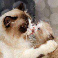 photo animals-cats-sweet.jpg