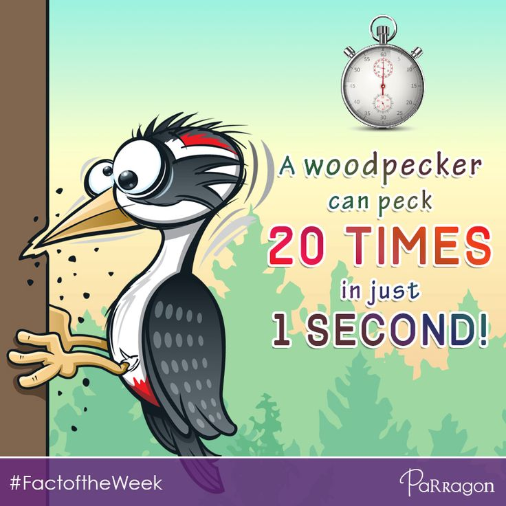 Did you know that a woodpecker can peck 20 times in just 1 second?! #FactoftheWeek #RandomFact #NowYouKnow