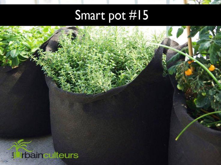 Smart Pot #15